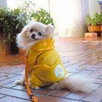 犬用のレインコート、おすすめは?手作りもできる?