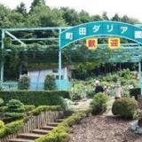 東京町田園でダリヤの見頃に感激!2016日程・イベント情報、品種・種類をレポート