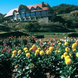 【秋田雄和】国際ダリヤ園2016|700種類に感激!日程、開花状況、品種・種類をレポート