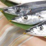 秋刀魚の旬の時期は何月まで?一番脂がのっているシーズン、栄養、見分けるポイント、安く買える時期について
