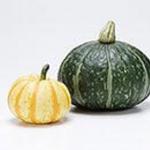 かぼちゃは低カロリーでダイエットにおすすめ!効果的に太らない体質作り