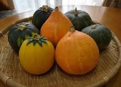 西洋かぼちゃと日本かぼちゃの違い、種類。栄養。品種や特徴についてのまとめ