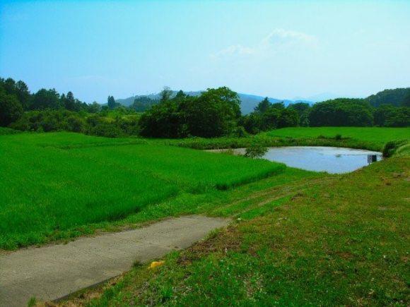 池tと田んぼ
