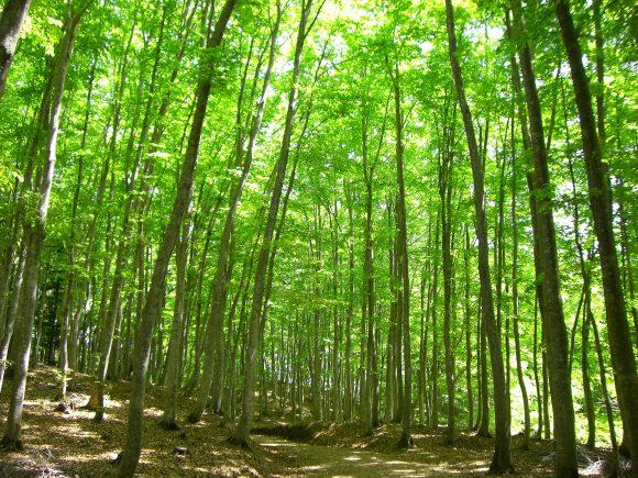 林の家紋である丸に林の角字の由...