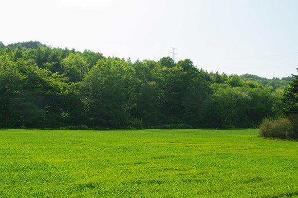 原に田んぼの風景