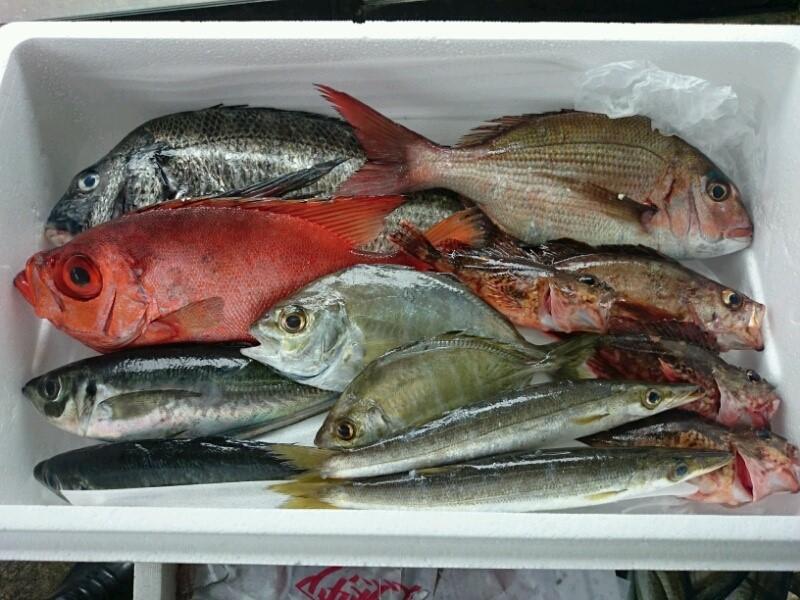 豊後水道の魚
