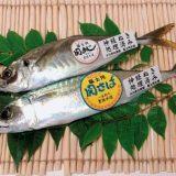 豊後水道の旬の魚 とは?魚のランクまとめ!関さば祭りは3月に開催?