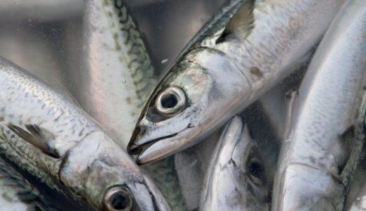 鯖の食あたりの原因はアレルギー?アニサキスの症状と対策まとめ