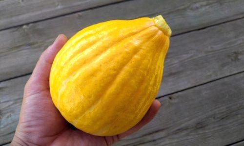 コリンキーかぼちゃの特徴・旬の時期はいつ?皮の切り方は簡単?|西洋カボチャ