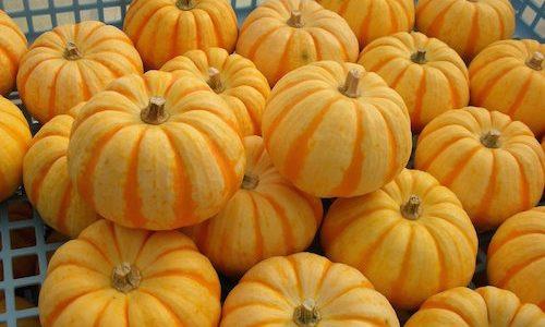 プッチィーニかぼちゃの特徴・旬の時期!どんな味なの?|西洋カボチャ
