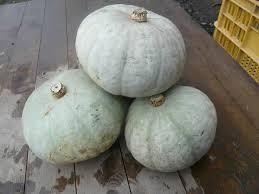 雪化粧かぼちゃの特徴・旬の時期などまとめ