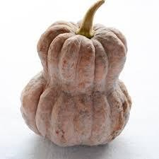 鹿ヶ谷かぼちゃ