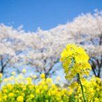 春分は今年のいつ?旬の食材・植物・生き物などまとめ