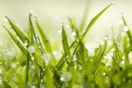 雨水は今年のいつ?旬の食材・植物・生き物などまとめ