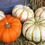 ペポかぼちゃの特徴・旬の時期などまとめ