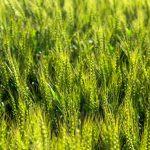 小満は今年のいつ?旬の食べ物・植物・生き物などまとめ