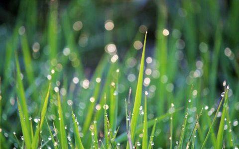 穀雨は今年のいつ?旬の食材・植物・生き物などまとめ