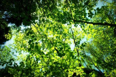 立夏は今年のいつ?旬の食材・植物・生き物などまとめ
