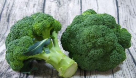 ブロッコリーの保存方法まとめ|冷蔵・冷凍・常温での保存期間の目安はどのくらい?