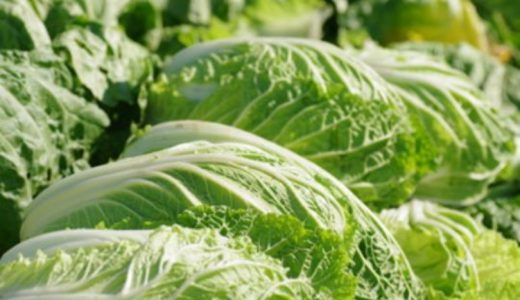 白菜の保存方法まとめ|冷蔵・冷凍・常温での保存期間の目安はどのくらい?