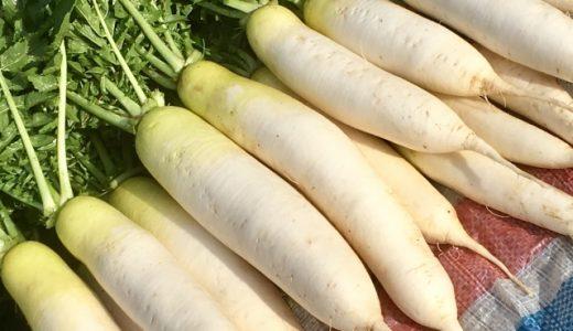 旬の大根おススメランキング35!甘い・辛い・美味しい品種はどれ?苦い品種も?