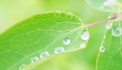 2021年白露はいつ?旬の食べ物・植物・生き物などまとめ