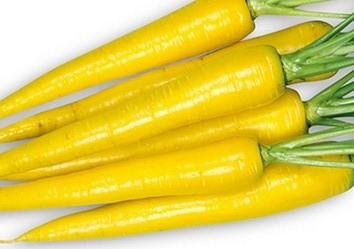 イエローハーモニーの特徴・旬の時期は?甘味が強く野菜スティックにぴったりな東洋種ニンジン