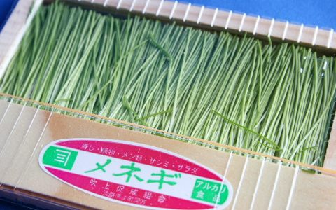 芽ねぎの特徴・旬の時期|静岡県の青ねぎ(葉ねぎ)に分類されるねぎ