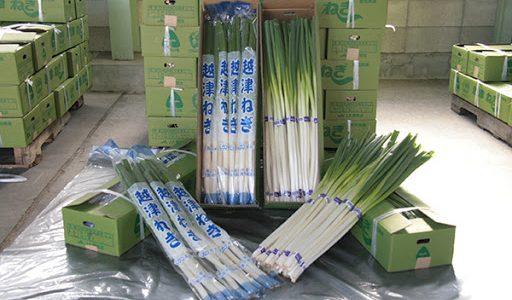 越津ねぎの特徴・旬の時期|愛知県の青ねぎ(葉ねぎ)に分類されるねぎ