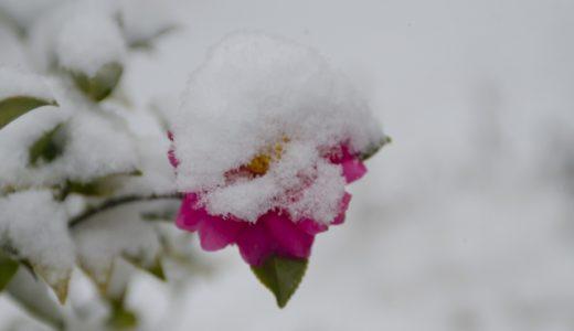 2021年は小雪いつ?旬の食べ物・植物・生き物などまとめ