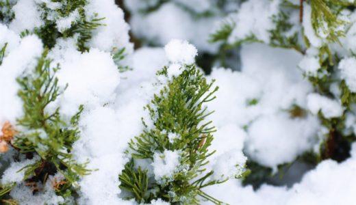 2021年の大寒はいつ?旬の食べ物・植物・生き物などまとめ