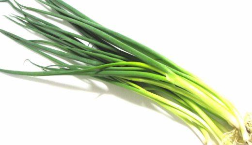 小ねぎの特徴・旬の時期|福岡県の青ねぎ(葉ねぎ)に分類されるねぎ