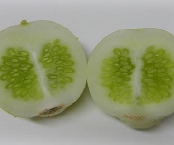 アップルきゅうりの特徴・旬の時期は?|改良種のきゅうりを紹介
