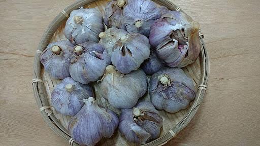 遠州極早生の特徴・旬の時期まとめ|遠州独特の香りの良いにんにく