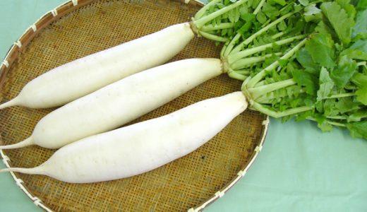 三浦大根の特徴・旬の時期は?たくあんで有名な8種類の主な品種の大根