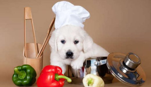 犬がピーマンを食べても大丈夫?与えるときの注意点・おすすめレシピは?