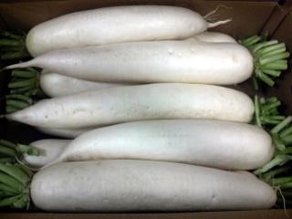 白首大根の特徴・旬の時期は?8種類の主な品種の大根