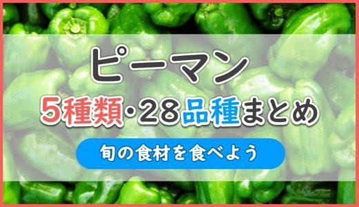 ピーマン5種類28品種まとめ|美味しいのはシシ型?ホルン型?ベル型?長円筒型?