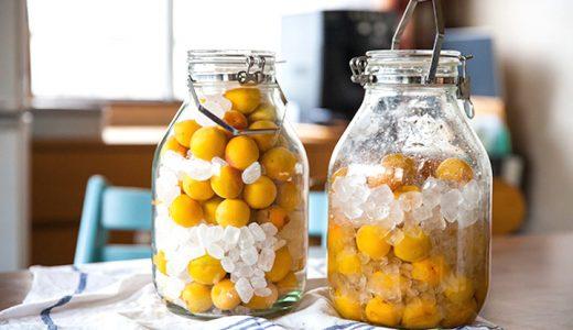 梅シロップの保存期間はどのくらい?常温・冷蔵・冷凍とオススメ保存容器