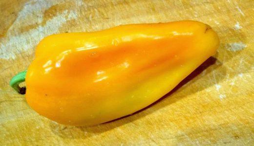 イエローホルンの特徴・旬の時期まとめ|ビタミンCが多い黄色のホルン型ピーマン