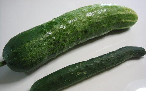 青大きゅうりの特徴・旬の時期は?|愛知県の伝統種のきゅうりを紹介