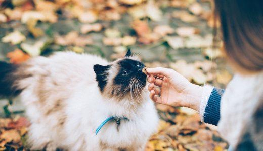 猫にあさりを食べさせて大丈夫?生は危険!与える時の注意点