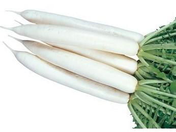 宮重大根の特徴・旬の時期は?8種類の主な品種の大根