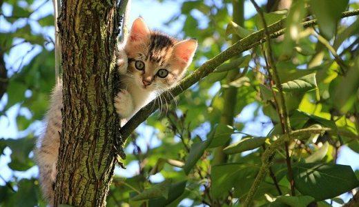 猫はレタスを食べれる?おススメレシピ・与える際の注意点まとめ