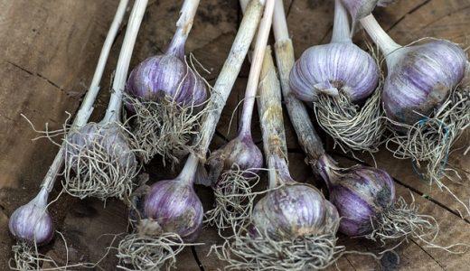 にんにく部位の紹介|鱗茎・芽・皮・花・葉・根をそれぞれ解説
