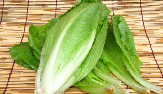コスレタス(ロメインレタス)の特徴・旬の時期まとめ|シーザーサラダでおなじみ!炒め物にも合うレタス