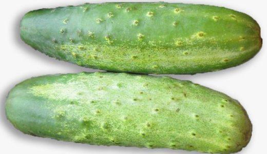 入山きゅうりの特徴・旬の時期は?|群馬県の伝統種のきゅうりを紹介