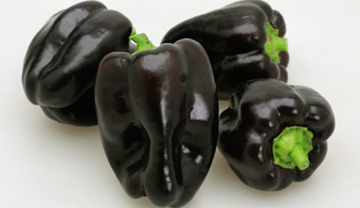 浜クロピーの特徴・旬の時期まとめ|国内では珍しい黒紫色のシシ型ピーマン