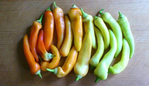 バナナピーマンの特徴・旬の時期まとめ|淡い黄緑色をしたほんのり甘いホルン型ピーマン