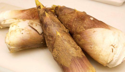 白子筍の特徴・旬の時期まとめ|京都府南部で生産されているアクの少ないブランドたけのこ